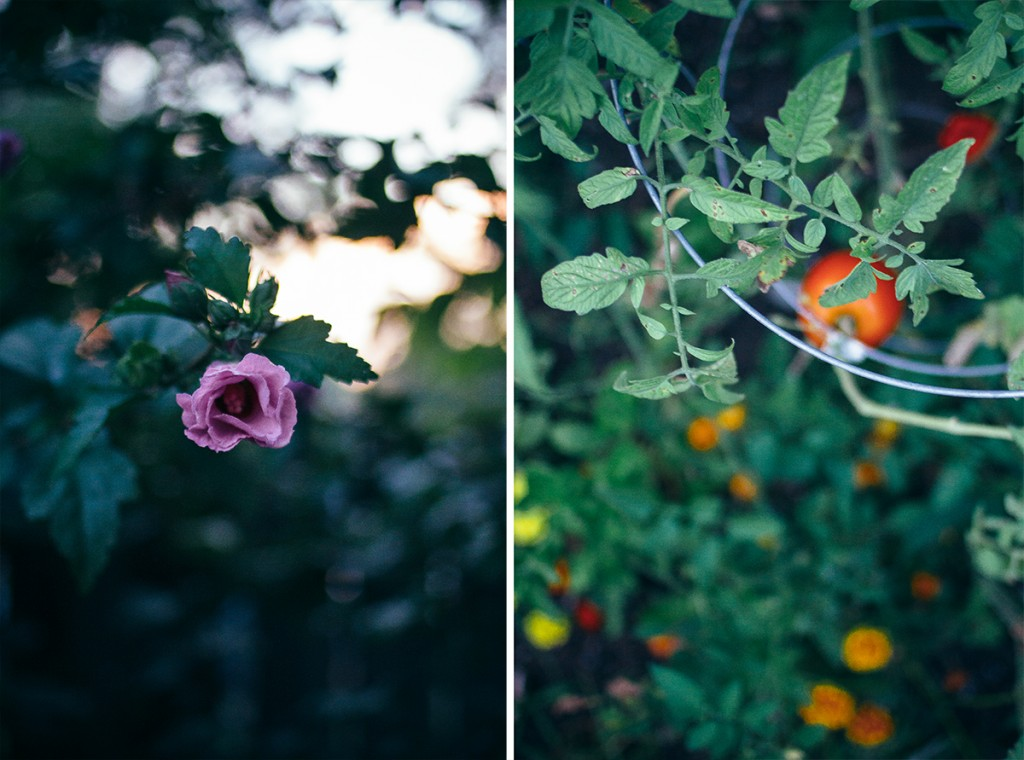 collage showing rose bush and apple tree
