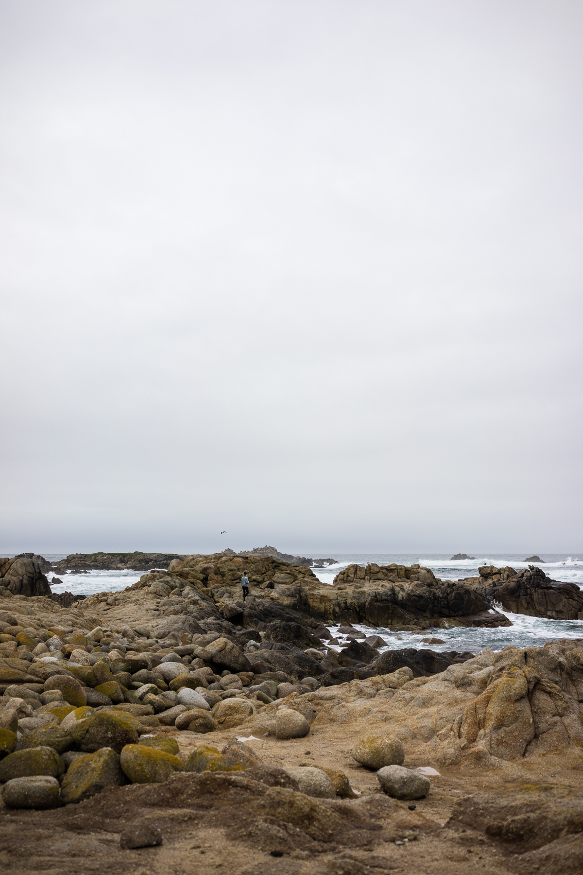 Cambria, San Fransisco, Monterey, Cayucos, Morro Bay, and Venice