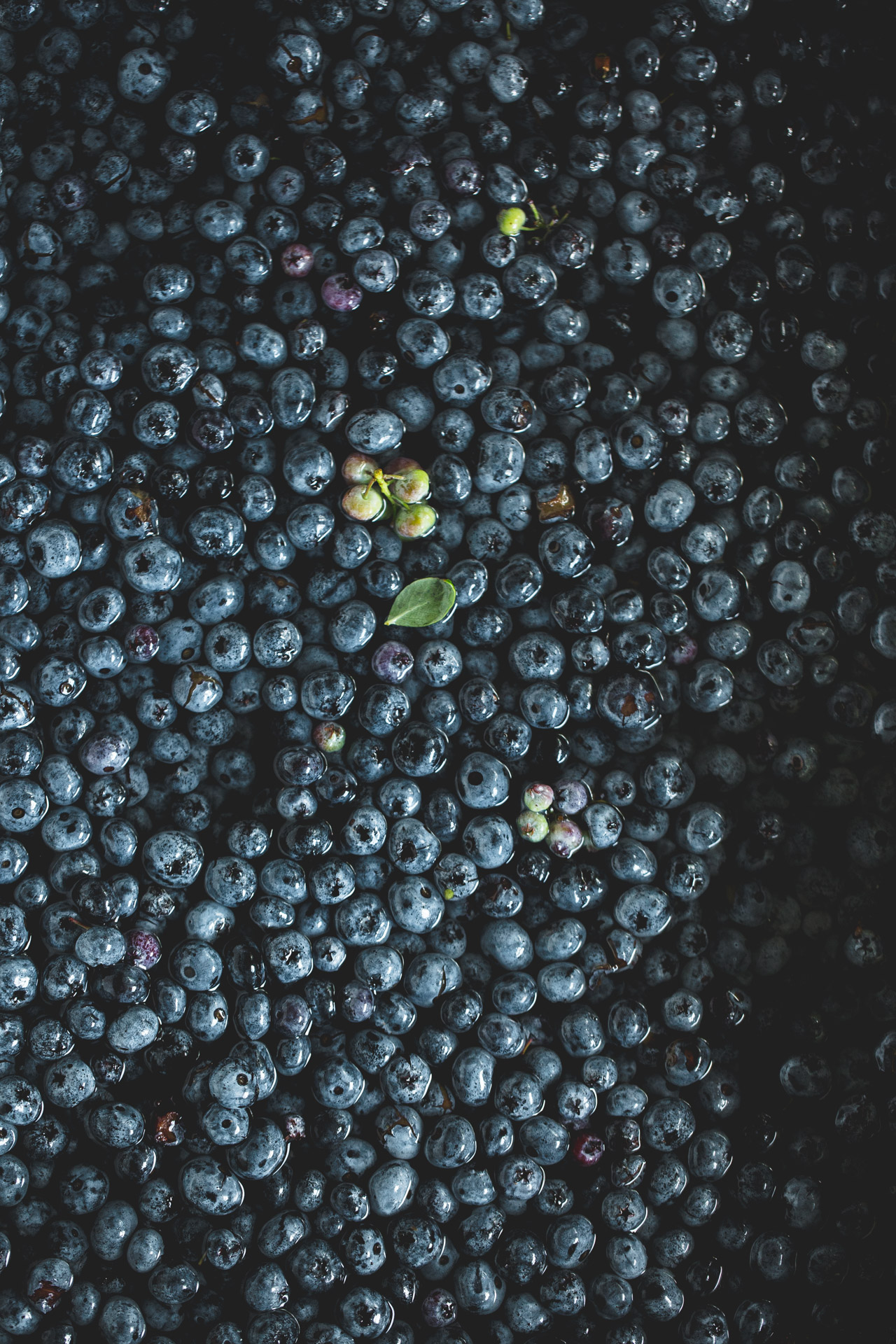 fresh blueberries floating in sink of water