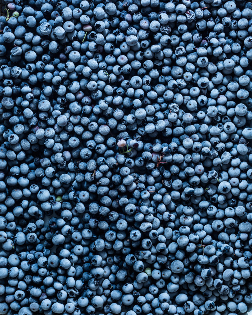 overhead of frozen blueberries from blueberry picking